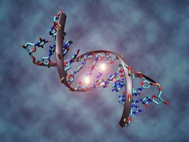 1342421220138_DNA_methylation